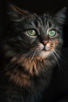 photogenicfelines: (Evaneo)