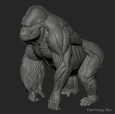 ArtStation - Gorilla Anatomy & 3D PRINT object, kunyoung heo