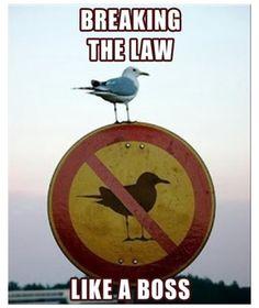 """LOL """"breaking the law... like a boss"""" xD"""