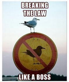 "LOL ""breaking the law... like a boss"" xD"