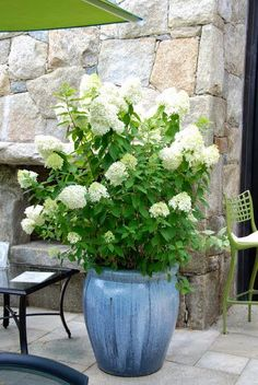 Container Gardening with Potted Hydrangea | OMG Lifestyle Blog