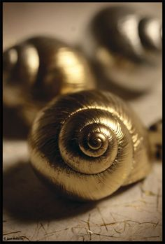 Spray-paint shells gold for Christmas to use as decorating accents: add to wreaths, bowls of pine cones, and tree decorations Gold Everything, Or Noir, Gold Aesthetic, Shades Of Gold, Stay Gold, Perfume, Touch Of Gold, Colour Board, All That Glitters