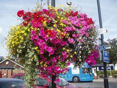 Hanging Basket Plants | Replanting Hanging Baskets — Choice Plants