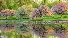 Обои природа весна пришла