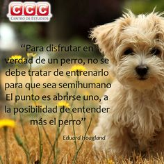 #frases #perros