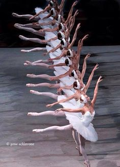 Swan Lake magic