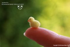 Fluffy Easter Chick - Handmade by Hummingbird Miniatures - 1/12 scale dollhouse miniature