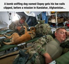Dogs In The Army