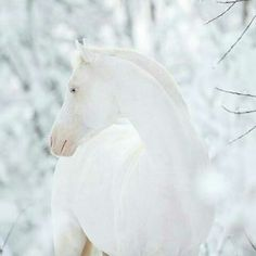 Snow white all the pretty horses, beautiful horses, animals beautiful, horses in snow Horses In Snow, White Horses, Most Beautiful Animals, Beautiful Horses, Zebras, Animals And Pets, Cute Animals, Akhal Teke Horses, Magnificent Beasts