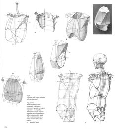 ✤ || CHARACTER DESIGN REFERENCES | キャラクターデザイン |  • Find more at www.facebook.com/... & www.pinterest.com... and learn how to draw: 解剖 •  علم التشريح • анатомия • 解剖学 • anatómia • एनाटॉमी • ανατομία • 해부 #anatomy #anatomie #anatomia #anatomía #anatomya #anatomija #anatoomia #anatomi #anatomija from the art of Disney, Pixar, Studio Ghibli and more || ✤