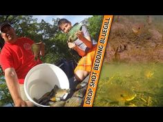 How to Drop Shot Bedding Panfish - YouTube