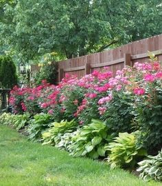 Knockout roses and hostas by louellaa