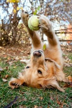 It may just be a ball to us but to a dog its hours of entertainment