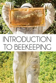 Stream this great introduction to beekeeping class any time and watch over and over! Taught by Hilary Kearney of Girl Next Door Honey.