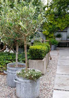 Polepšajte teraso in vrt s cvetličnimi lonci Wrap the terrace and garden with flower pots Gravel Garden, Garden Planters, Garden Landscaping, Zinc Planters, Back Gardens, Small Gardens, Outdoor Gardens, Dream Garden, Garden Planning