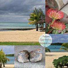 Le PreskiL, douceur au coeur du lagon |   Lorsque l'on arrive au PreskiL, c'est un univers tropical à l'architecture de lambrequ...