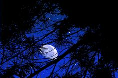 Image from http://images.fineartamerica.com/images-medium-large-5/starry-starry-night-mike-flynn.jpg.