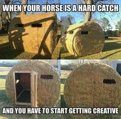 Creative way to catch a horse!  :)