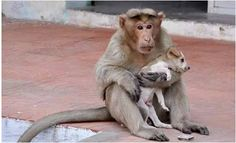 Courage's Blog: Photos:Check out the Incredible story of a Monkey ...