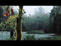 Nature Sounds Relaxing River Sounds - Singing Birds Ambience - YouTube Nature Sounds, Singing, Meditation, Birds, River, Youtube, Art, Art Background, Kunst