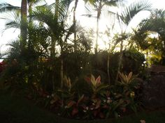 My oasis.
