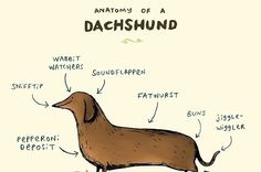 18 Perfect Gifts For Dachshund Lovers Dachshund Clothes, Dachshund Gifts, Dachshund Dog, Dog Training Come, Dog Training Treats, Dog Breeds Little, Best Dog Breeds, Royal Canin Dog Food, Dachshund Puppies For Sale
