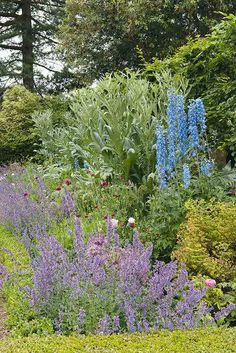 country garden boarders planted for summer Boarder Plants, Period Living, Herbaceous Border, Family Garden, Boarders, Country, Projects, Summer, Log Projects
