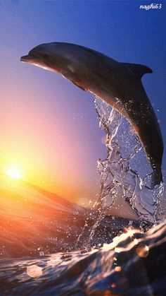sea life - sea life photography - sea life underwater - sea life artwork - sea life watercolor sea l Orcas, Beautiful Creatures, Animals Beautiful, Majestic Animals, Fauna Marina, Water Animals, Wild Animals, Water Life, Ocean Creatures