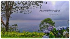 The ever changing weather offers endless new views from the edge of Zomba Mountain. Not in picture: my coffee and armchair New View, The Locals, Books Online, Wander, Traveling By Yourself, Safari, Armchair, Mountain, Adventure