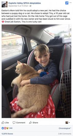 Mom tells boy he can pick any animal at shelter. He picked this elderly, overweight and shy cat - Mom tells boy he can pick any animal at shelter. He picked this elderly, overweight and shy cat - Cute Funny Animals, Cute Baby Animals, Funny Cute, Animals And Pets, Cute Cats, Adorable Kittens, Wild Animals, I Love Cats, Crazy Cats