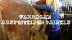 Miten saada hevosen jumiutuneesta lihaksesta poistumaan jopa 80% siihen kertyneestä maitohaposta? Tsekkaa videosarjan toinen osa niin pääset jyvälle!  http://impulsoblogi.blogspot.com/2016/12/shiatsu-hevoshierontaa-videolla-osa-2.html?spref=fb  Hevosshiatsu, hevoshieronta, hevoshieroja, Tampere, Jämsä