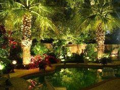 tropical backyard