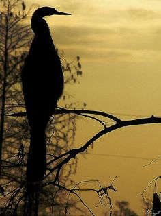 29 Beautiful Examples of Silhouette Photography | Inspiration