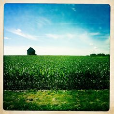 """""""To the left a cornfield carries into the distance, dips and rises to the blue sky, a rolling plain of green and healthy plants aligned in close order, row upon row upon row. Great Wide Open, Farmer's Daughter, Photography Portfolio, Rustic Charm, Forests, Oceans, Country Life, Farmers, Barns"""