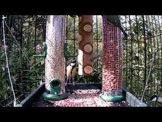 Dog Crate Feeding Station Success – www.wildlifekate.co.uk Caged Bird Feeders, Best Bird Feeders, Homemade Bird Feeders, Bird House Feeder, Ground Bird Feeder, Bird Suet, Bird Feeder Plans, Bird Feeding Station, Backyard Birds