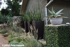 Giant hesperaloes in pots, ornamental grasses planted in a meadowy mix at their feet