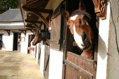 centre équestre, chevaux, écuries, activités, domaine des ormes, camping, bretagne