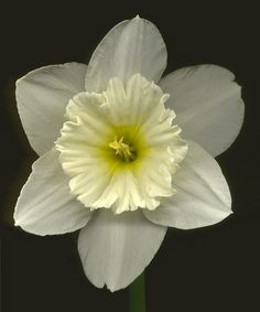 Daffa Daffodil. I love daffodils - they're so happy and at least in my garden they mean spring isn't too far off.