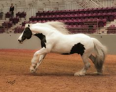 WR Young Latcho Lou Gypsy Horse, One In A Million, Four Legged, Im In Love, Animal Kingdom, North America, Fairy Tales, Horses, Pictures