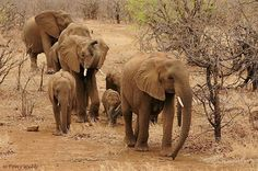 My friend Tony Webb Posted Image of Elephant Family On community of wildlife photographers Click below link to view in full mode http://photos.wildfact.com/image/158/elephant-herd