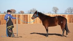 Clinton Anderson, 5 Tips to Stop the Spooking Horse Clinton Anderson offers advice on helping your horse overcome his fear.