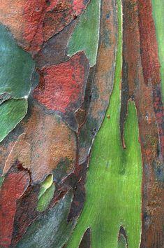 Cedric Pollet exhibition: Secrets of Bark Art Texture, Wood Texture, Natural Texture, Patterns In Nature, Textures Patterns, Rainbow Eucalyptus Tree, Peeling Paint, Tree Bark, Tree Of Life