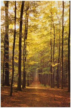 Trees and Path Through the Forest Nature Art Travel Poster 12x18