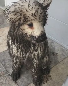 March 08 2020 at Cute Wild Animals, Cute Little Animals, Cute Funny Animals, Animals For Kids, Funny Dog Memes, Funny Cats And Dogs, Cute Dogs And Puppies, Pumi Dog, Dogs And Kids