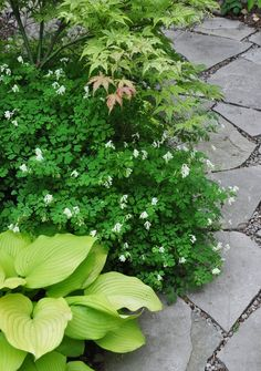 Three Dogs in a Garden: Garden Canadensis, Part 2: Planting Combinations for…