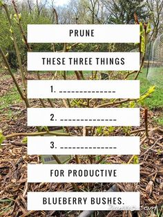How to Prune Blueberry Bushes This post is a quick and valuable lesson in pruning blueberry bushes. Growing blueberries is a fun and easy way to get fresh fruit and nutrients into your diet. This …