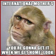 essay monkey