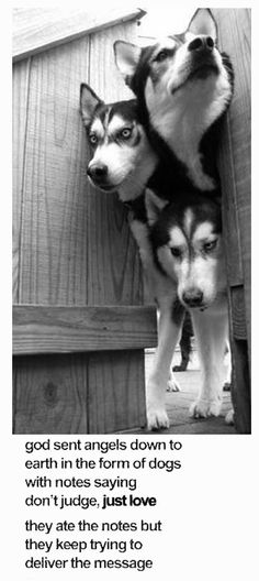 husky  malamutes...posted by a.l.s