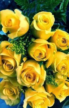 yellow roses #roses #yellow