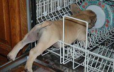 Tudo por um restinho de comida: este cão se enfiou dentro da lava-louças (Foto: Reprodução/Bored Panda)